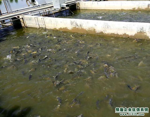 低碳高效循环水养殖养鱼水槽图片